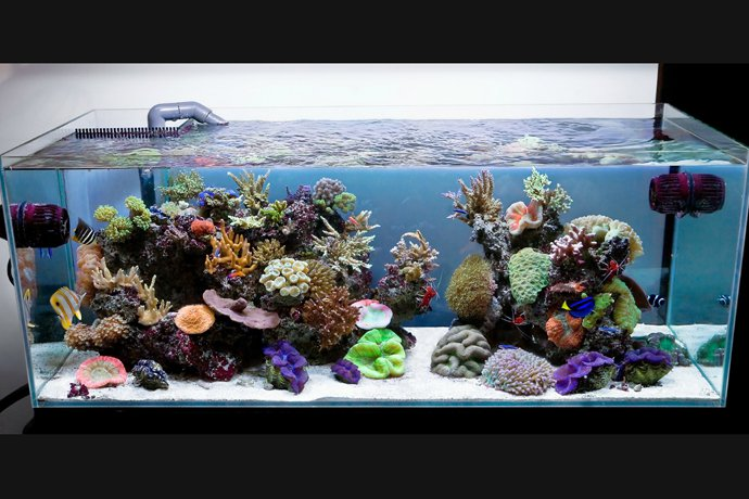 aquarium-house-ArchitectureArtDesigns-3.jpg
