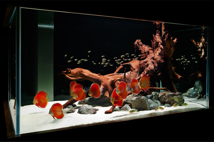aquarium-house-ArchitectureArtDesigns-11.jpg